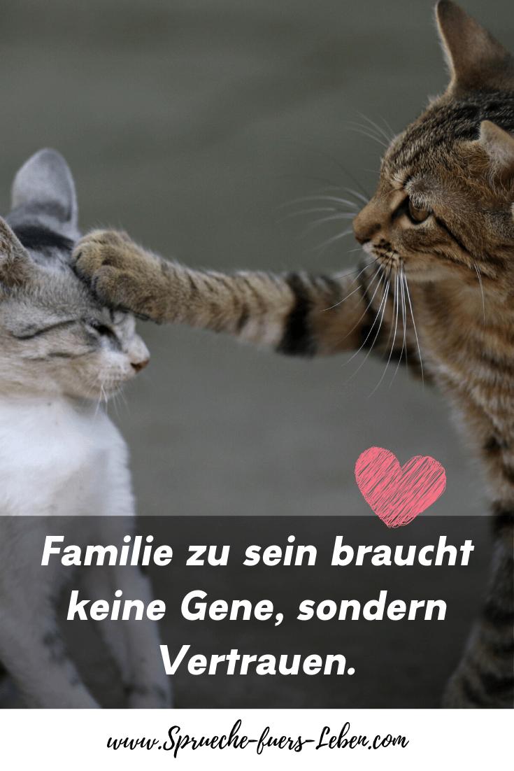 Familiezu sein braucht keine Gene, sondern Vertrauen.
