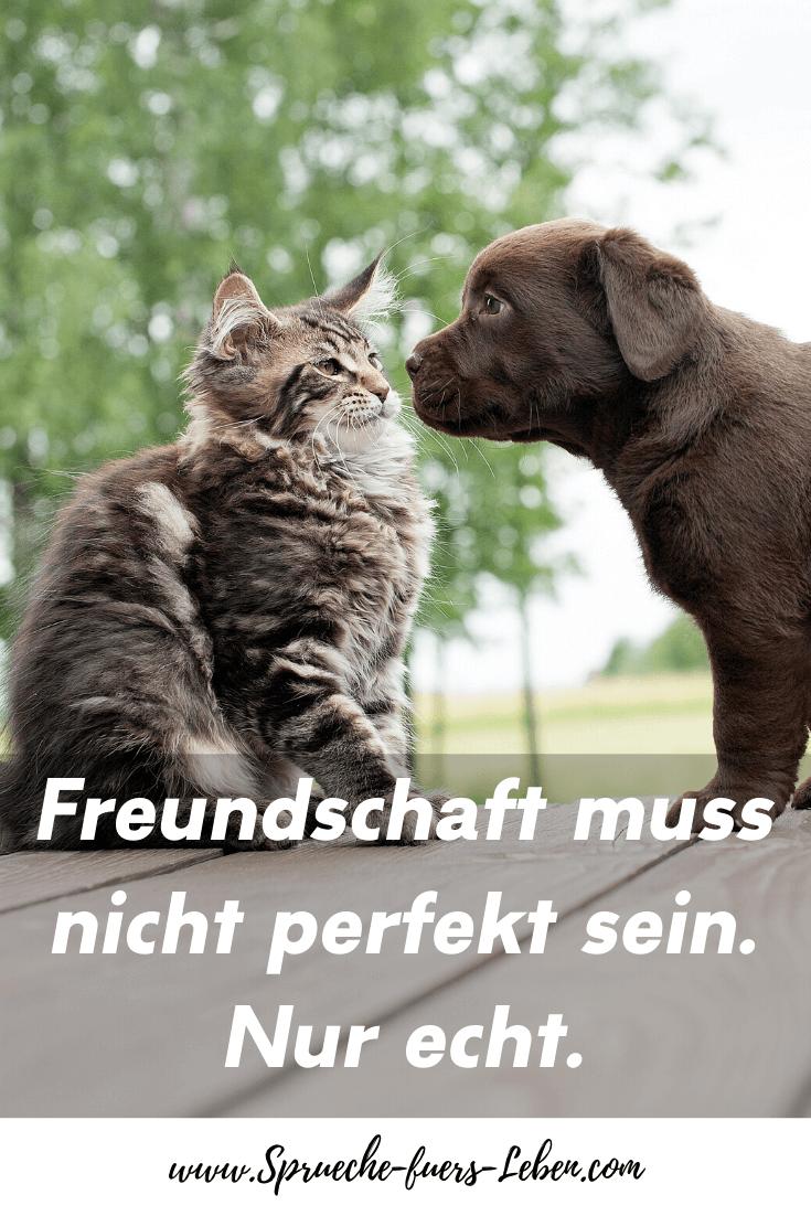 Freundschaft muss nicht perfekt sein. Nur echt.
