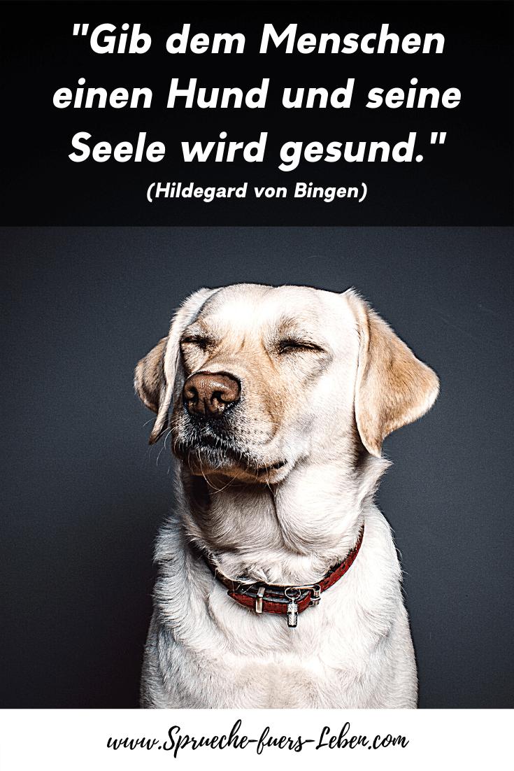 """""""Gib dem Menschen einen Hund und seine Seele wird gesund."""" (Hildegard von Bingen)"""
