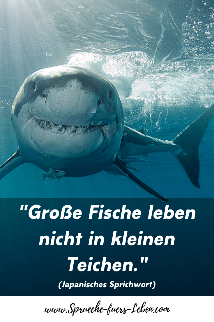 """""""Große Fische leben nicht in kleinen Teichen."""" (Japanisches Sprichwort)"""