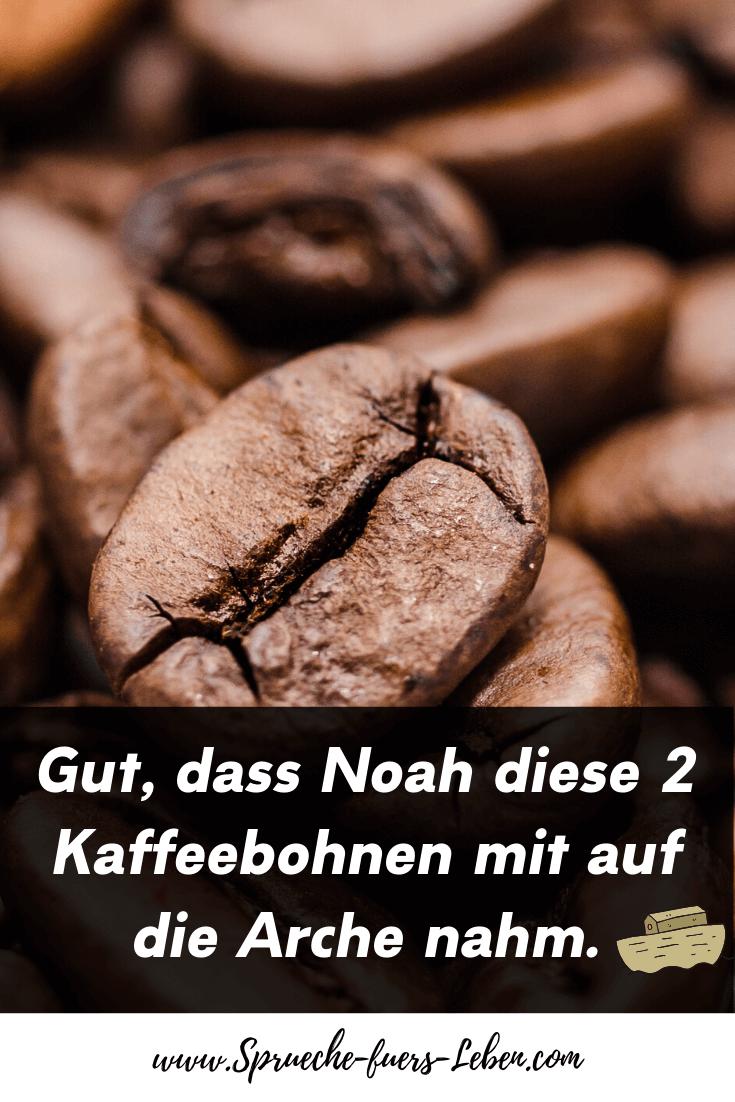 Gut, dass Noah diese 2 Kaffeebohnen mit auf die Arche nahm.