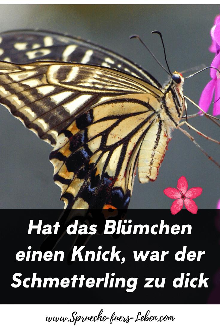 Hat das Blümchen einen Knick, war der Schmetterling zu dick