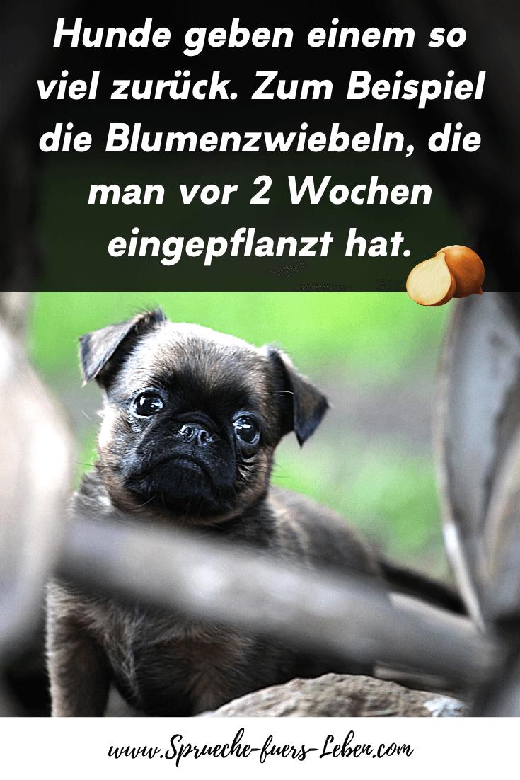 Hunde geben einem so viel zurück. Zum Beispiel die Blumenzwiebeln, die man vor 2 Wochen eingepflanzt hat.