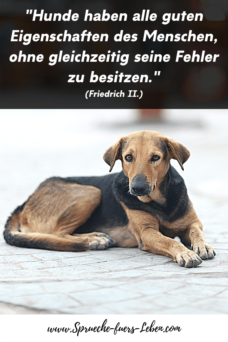 """""""Hunde haben alle guten Eigenschaften des Menschen, ohne gleichzeitig seine Fehler zu besitzen."""" (Friedrich II.)"""