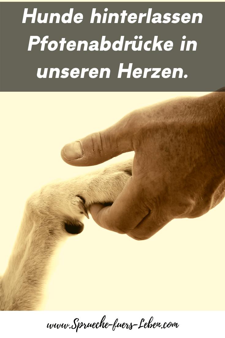 Hunde hinterlassen Pfotenabdrücke in unseren Herzen.