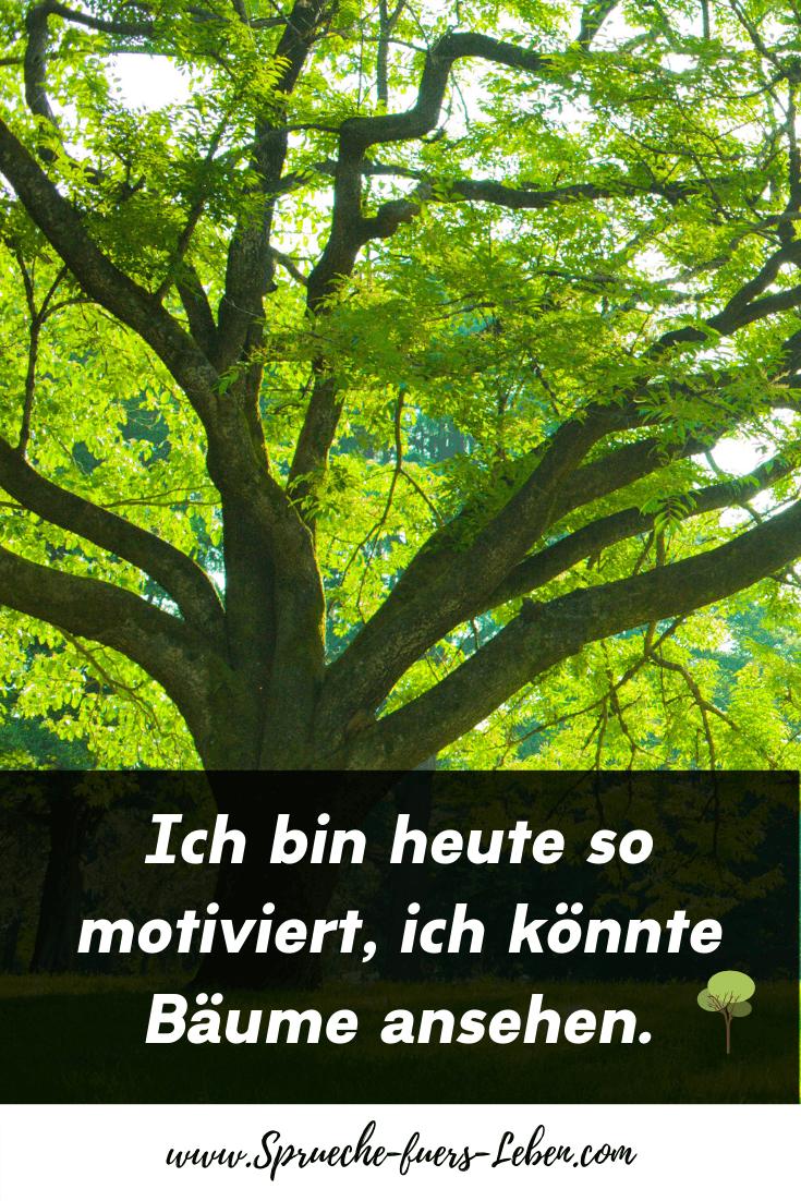 Ich bin heute so motiviert, ich könnte Bäume ansehen.