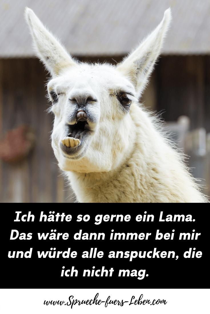 Ich hätte so gerne ein Lama. Das wäre dann immer bei mir und würde alle anspucken, die ich nicht mag.
