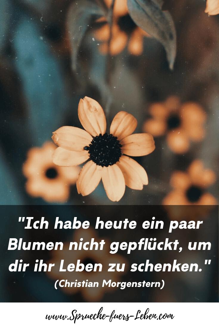 """""""Ich habe heute ein paar Blumen nicht gepflückt, um dir ihr Leben zu schenken."""" (Christian Morgenstern)"""