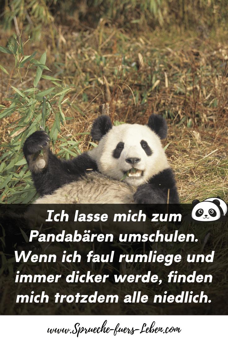 Ich lasse mich zum Pandabären umschulen. Wenn ich faul rumliege und immer dicker werde, finden mich trotzdem alle niedlich.