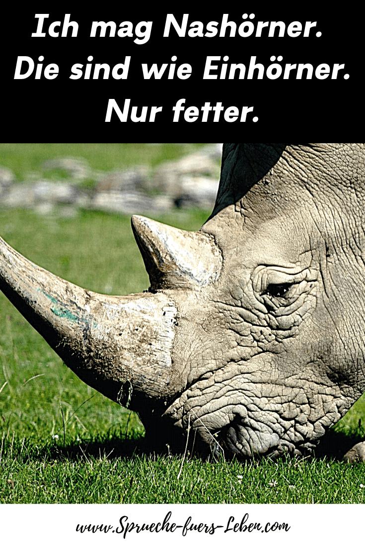 Ich mag Nashörner. Die sind wie Einhörner. Nur fetter.