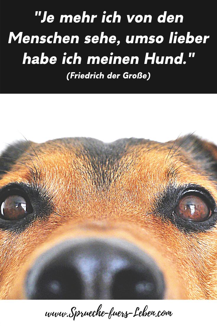 """""""Je mehr ich von den Menschen sehe, umso lieber habe ich meinen Hund."""" (Friedrich der Große)"""