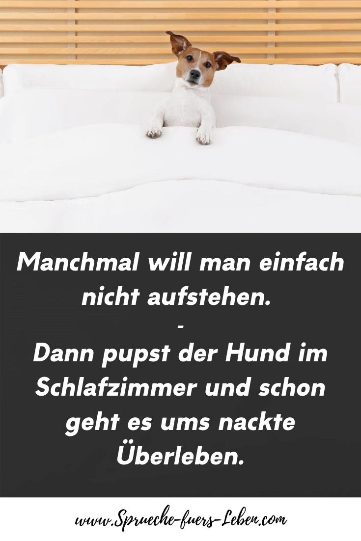 Manchmal will man einfach nicht aufstehen. Dann pupst der Hund im Schlafzimmer und schon geht es ums nackte Überleben.