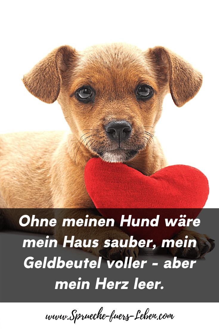 Ohne meinen Hund wäre mein Haus sauber, mein Geldbeutel voller - aber mein Herz leer.