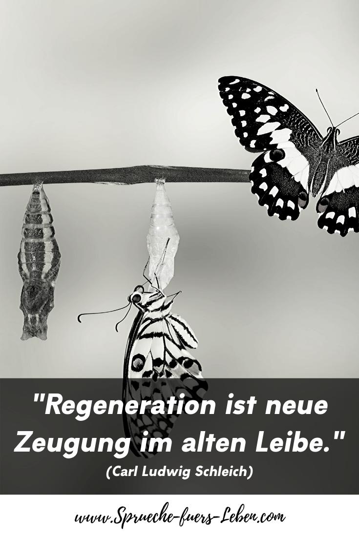 """""""Regeneration ist neue Zeugung im alten Leibe."""" (Carl Ludwig Schleich)"""