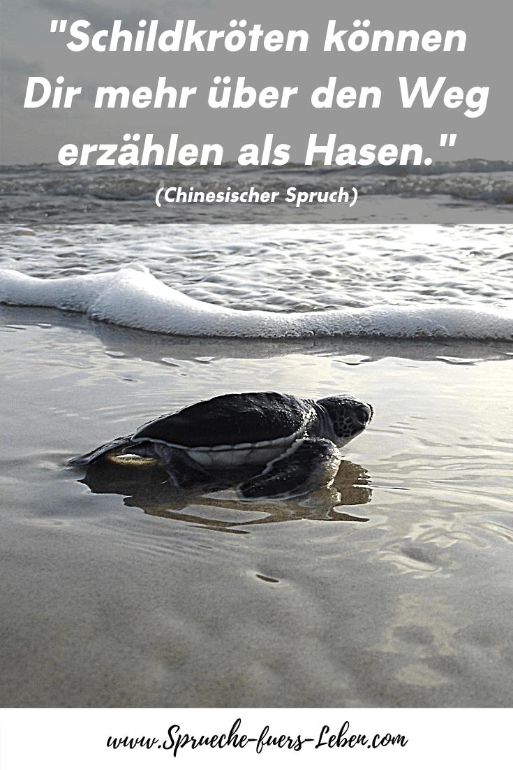 """""""Schildkröten können Dir mehr über den Weg erzählen als Hasen."""" (Chinesischer Spruch)"""
