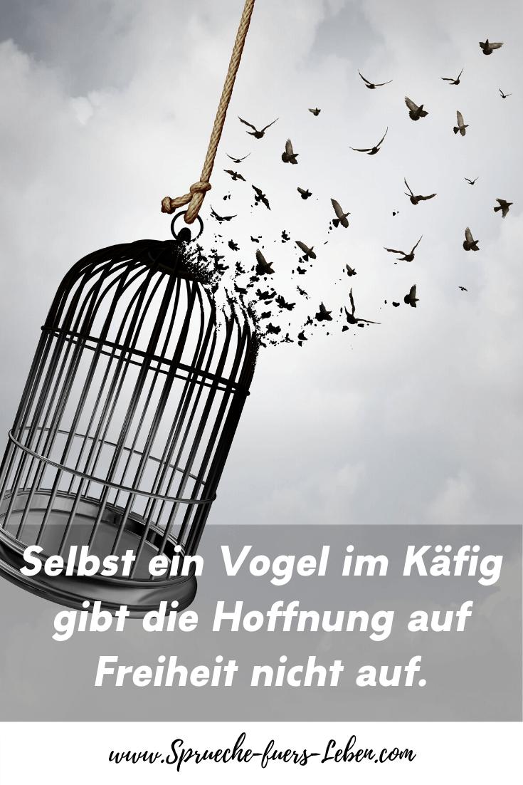 Selbst ein Vogel im Käfig gibt die Hoffnung auf Freiheit nicht auf.