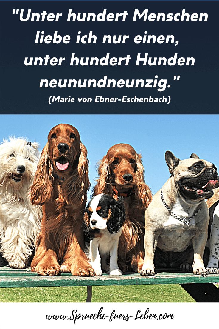 """""""Unter hundert Menschen liebe ich nur einen, unter hundert Hunden neunundneunzig."""" (Marie von Ebner-Eschenbach)"""