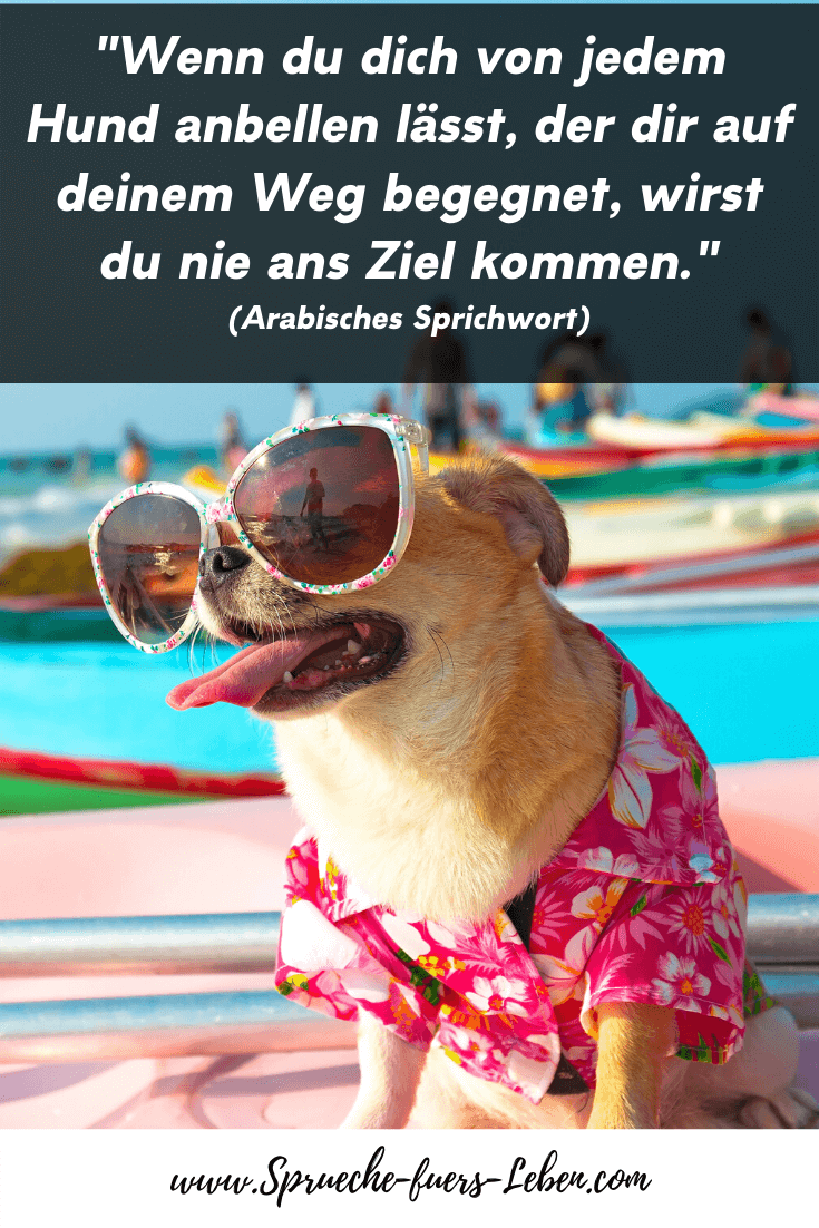 """""""Wenn du dich von jedem Hund anbellen lässt, der dir auf deinem Weg begegnet, wirst du nie ans Ziel kommen."""" (Arabisches Sprichwort)"""