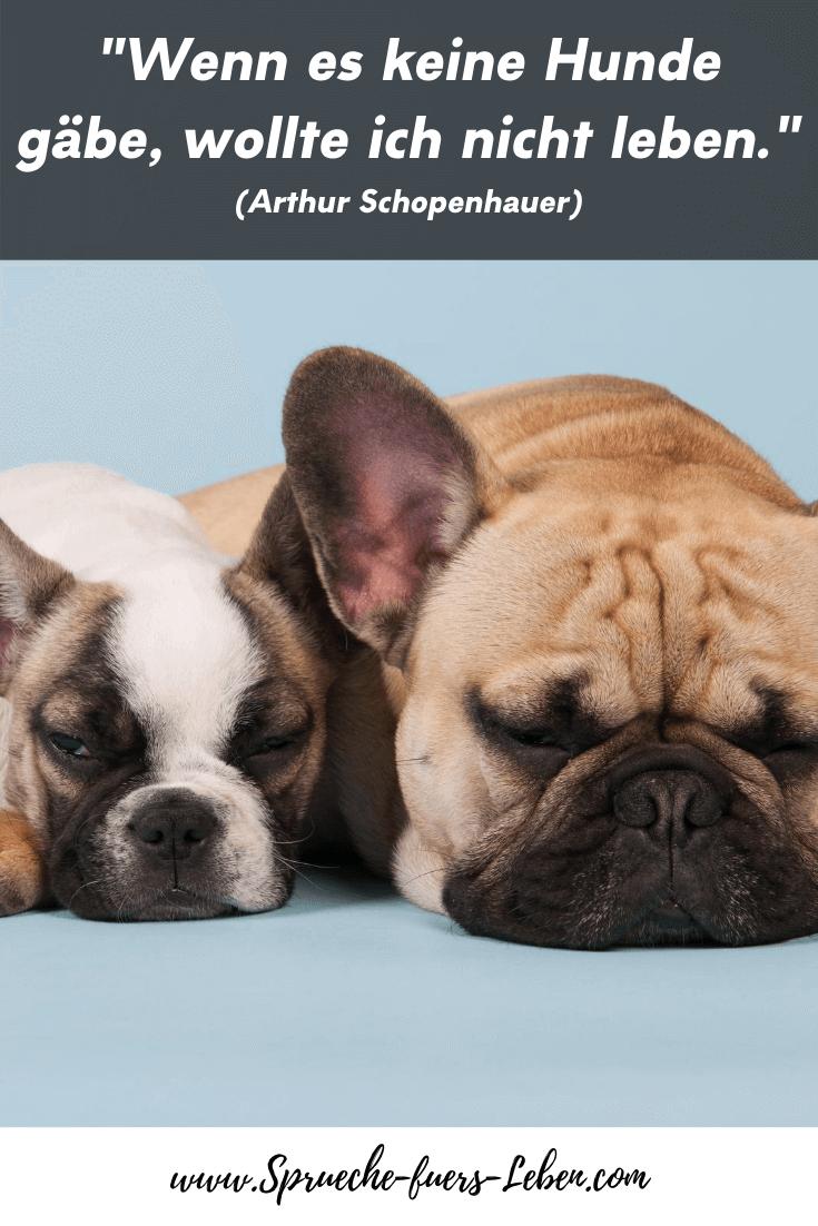 """""""Wenn es keine Hunde gäbe, wollte ich nicht leben."""" (Arthur Schopenhauer)"""