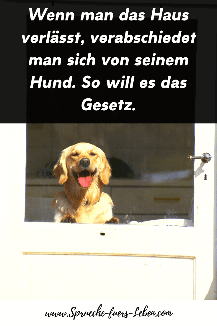 Wenn man das Haus verlässt, verabschiedet man sich von seinem Hund. So will es das Gesetz.