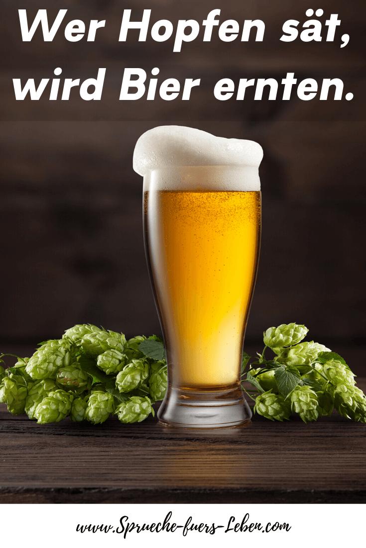 Wer Hopfen sät, wird Bier ernten.