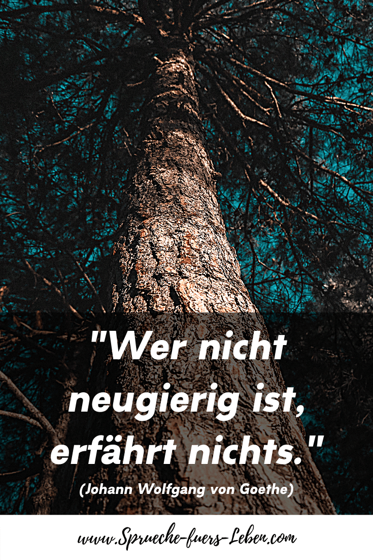 """""""Wer nicht neugierig ist, erfährt nichts."""" (Johann Wolfgang von Goethe)"""