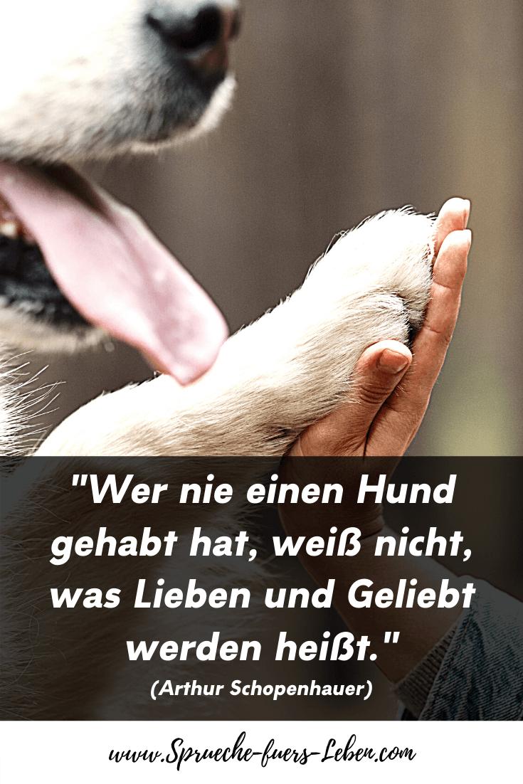 """""""Wer nie einen Hund gehabt hat, weiß nicht, was Lieben und Geliebt werden heißt."""" (Arthur Schopenhauer)"""