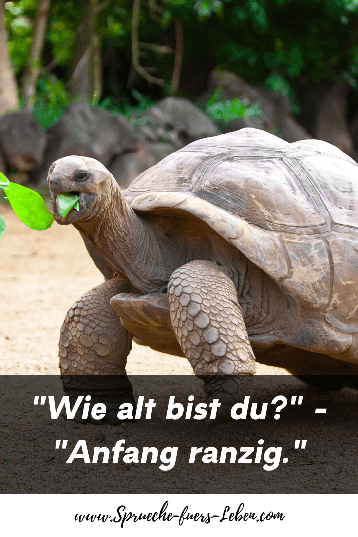 """Wie alt bist du?"" - ""Anfang ranzig."""